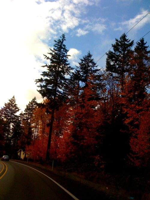 on the road to port townsend in the fall