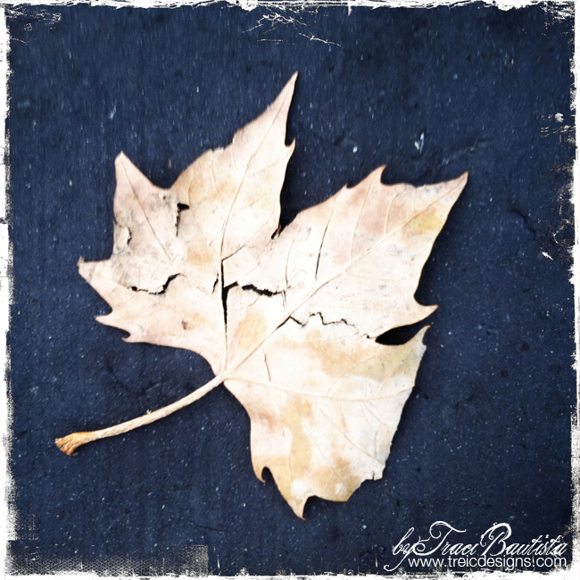Autumn_leaves3_byTraciBautista