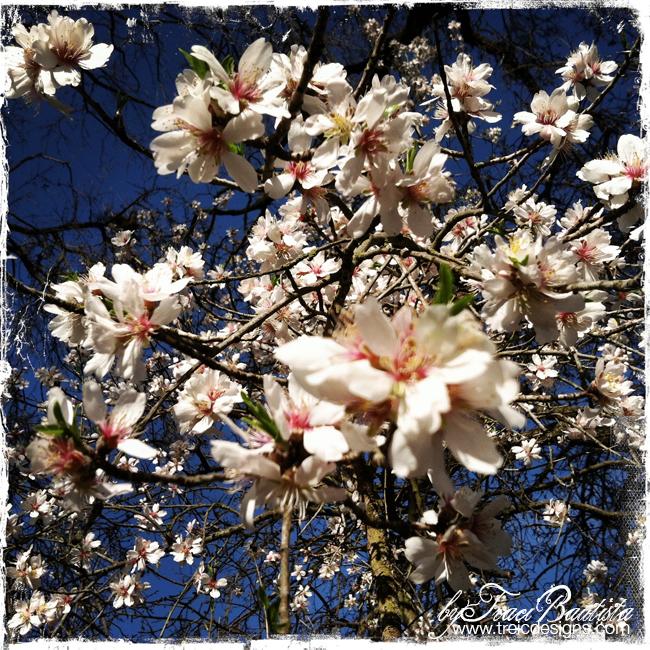 SpringFEVER_inspiration_styleREmix_byTraciBautista