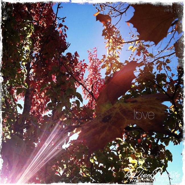 Gratitude_fall_thanksgivingBYtraciBAUTISTA10