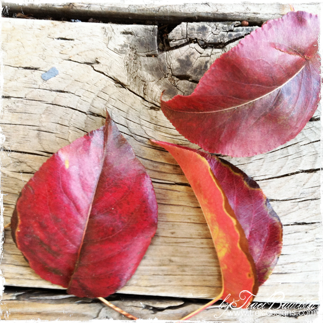 Autumn_leaves4_byTraciBautista
