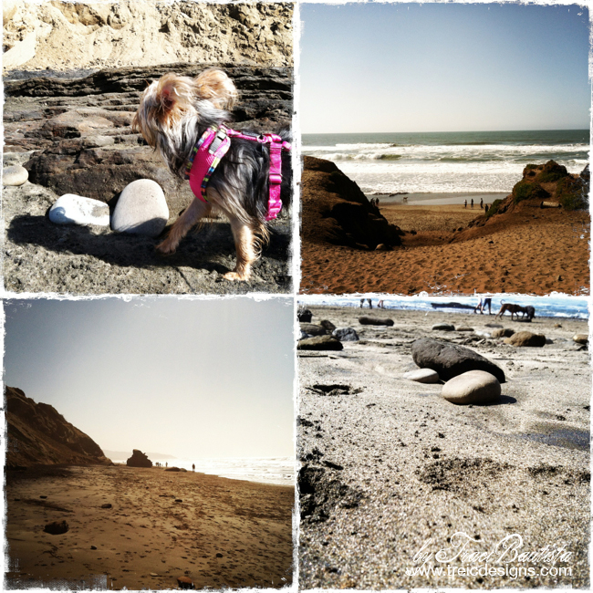 Exploring fort funston by traci bautista - 18