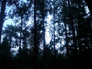 Idyllwildmorningtrees
